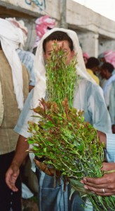 feuilles de khat a vendre
