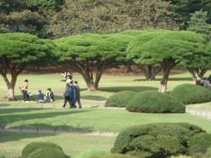 Shinjuku pinus densiflora R0013202