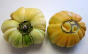 solanum aethiopicum DSC02086