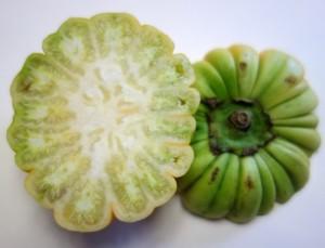 solanum aethiopicum DSC02092