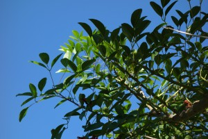 amalia-erythrina-crista-galli-dsc05650