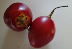 cyphomandra-betacea-tamarille-dsc00257