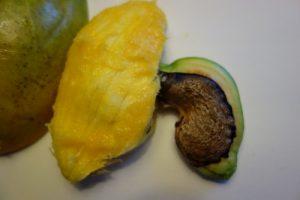 mangifera-indica-dsc00230