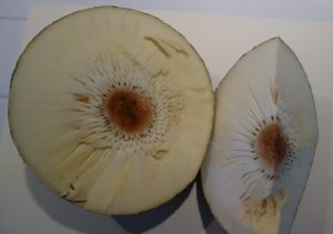 artocarpus-altilis-dsc02926