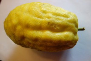 citrus medica DSC03597