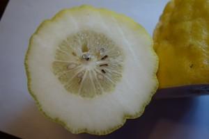 citrus medica