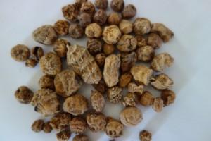 cyperus esculentus